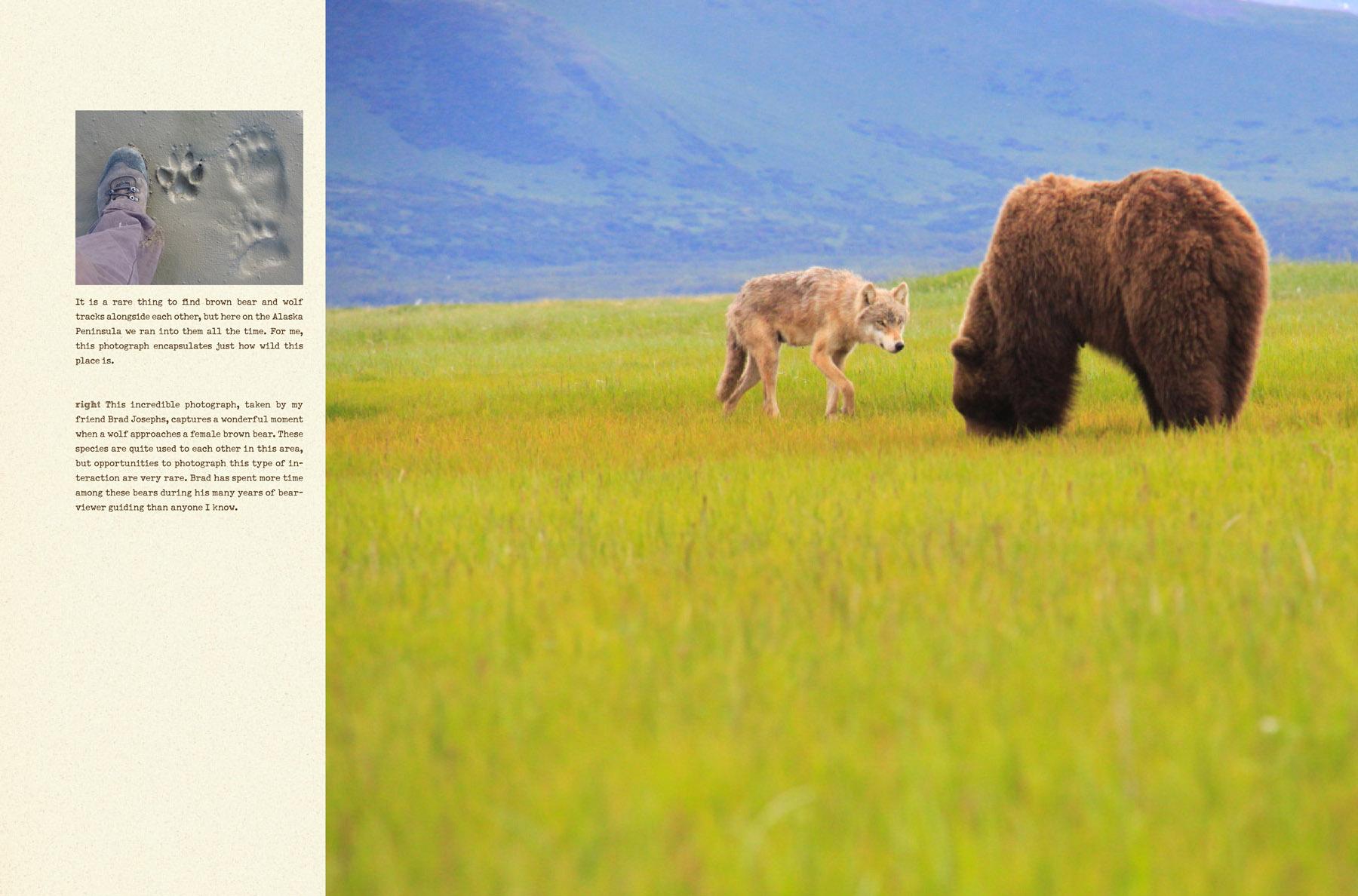 bears-portfolio-3