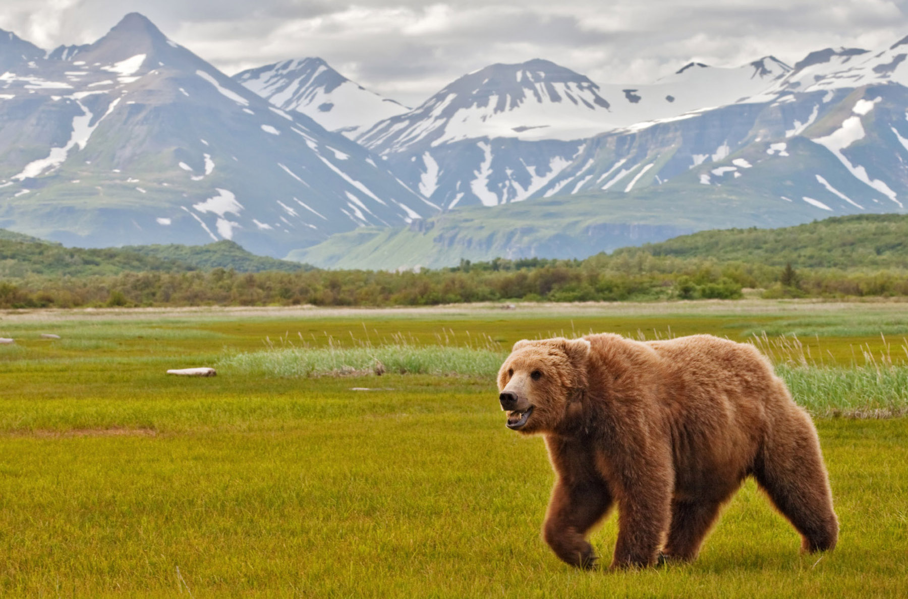 bears-portfolio-4
