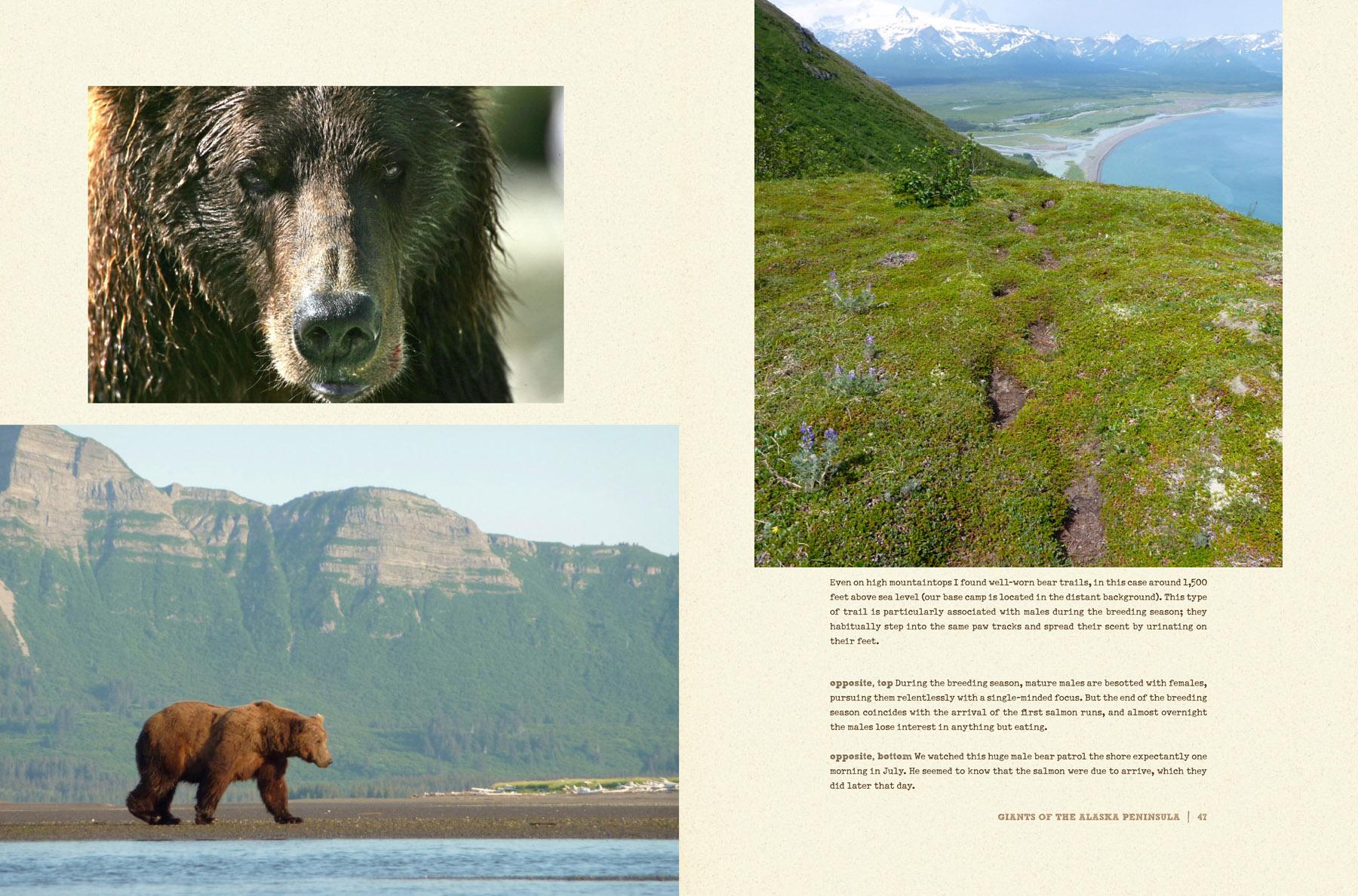 bears-portfolio-5