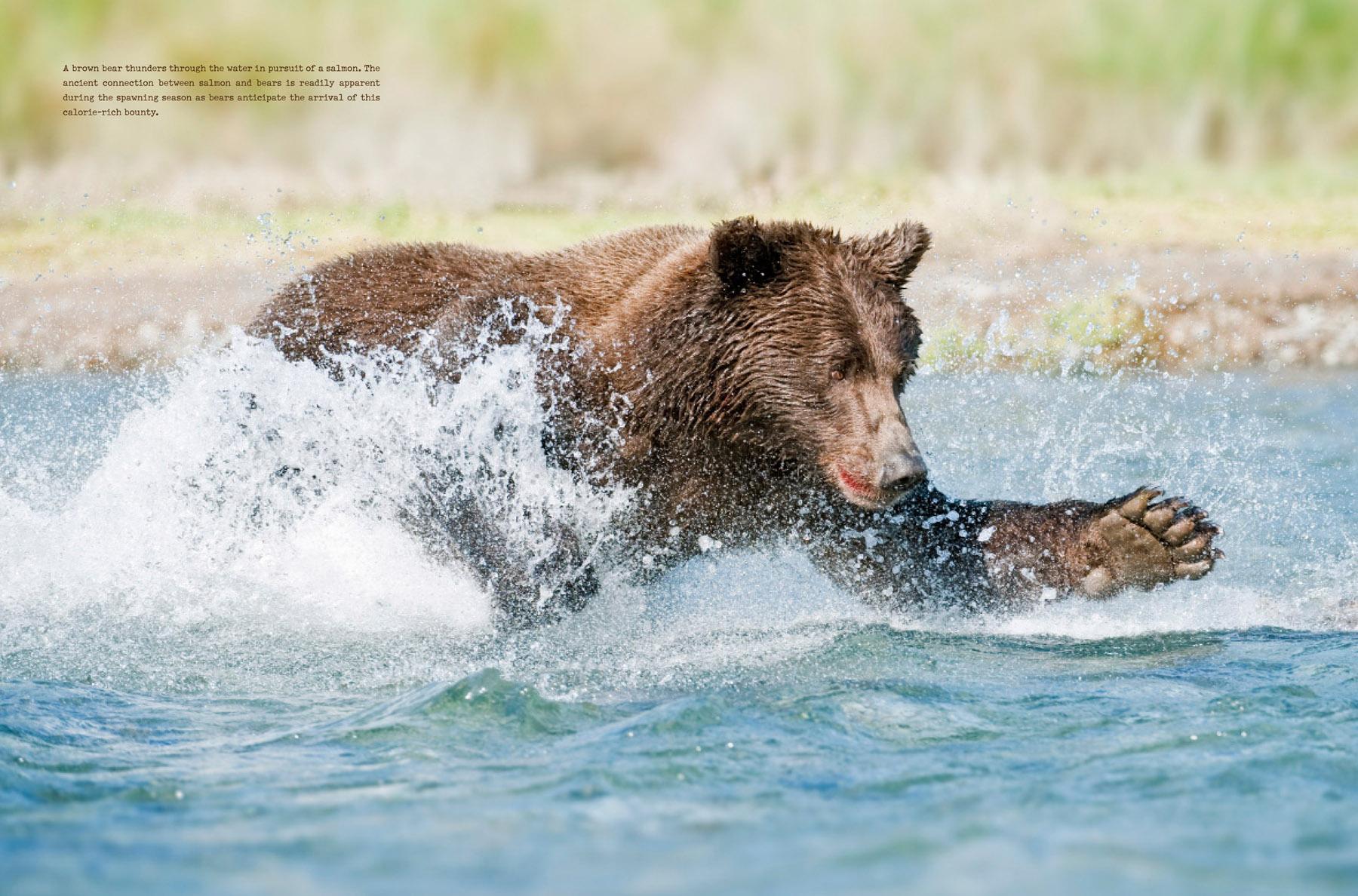 bears-portfolio-8